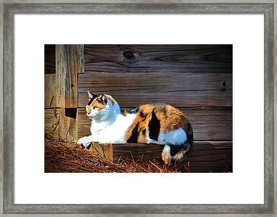 Calico Cat On The Steps Framed Print by Cynthia Guinn