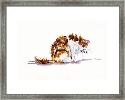 Calico Cat Washing Framed Print