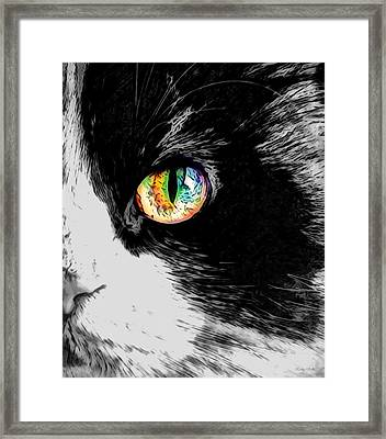 Calico Cat With A Splash Framed Print