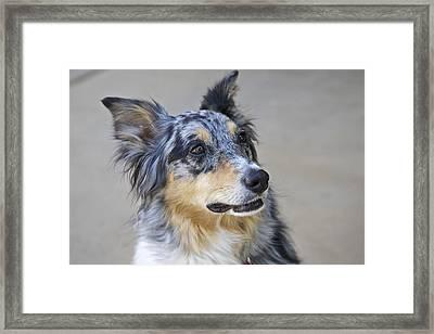 Calico Dog Framed Print by Robert Joseph