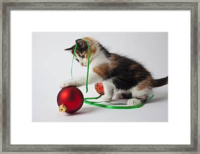 Calico Kitten And Christmas Ornaments Framed Print by Garry Gay