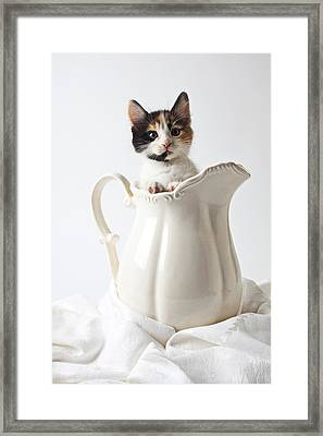 Calico Kitten In White Pitcher Framed Print by Garry Gay