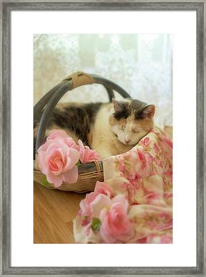 Calico Kitty In A Basket With Pink Roses Framed Print