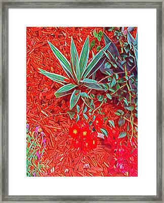 Caliente Framed Print