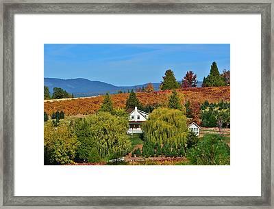 California Apple Hill Framed Print