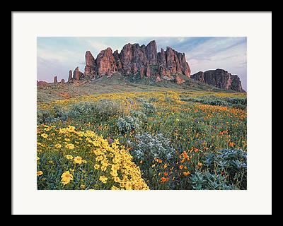 Aster Photographs Framed Prints