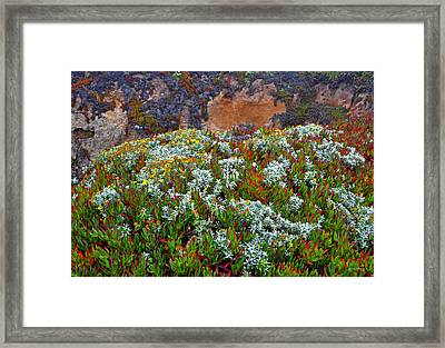 California Coast Wildflowers Framed Print