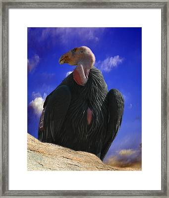 California Condor Framed Print by Anthony Jones