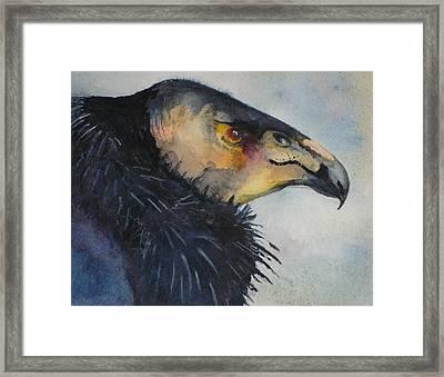 California Condor Framed Print by Sonja Guard