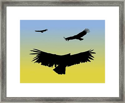 California Condors In Flight Silhouette At Sunrise Framed Print