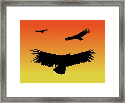 California Condors In Flight Silhouette At Sunset Framed Print