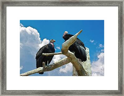 California Condors Framed Print