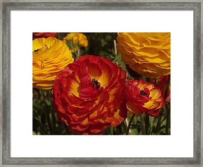 California Gold Framed Print by Jean Booth