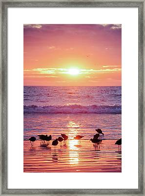 California Gold  Framed Print by Nicki Frates