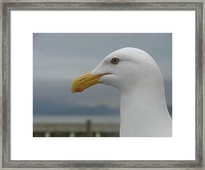 California Gull Framed Print by Wayne Whitney