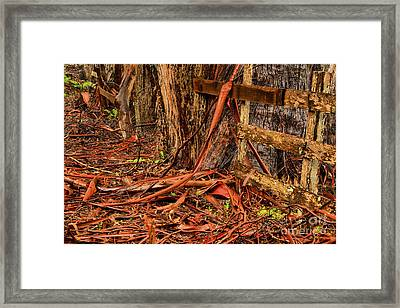 California Highway 1 Fence Posts Framed Print