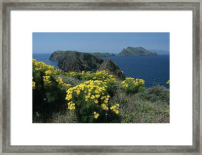 California Island Sunshine Framed Print