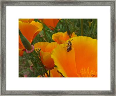 California Love Framed Print