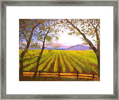California Napa Valley Vineyard Framed Print by Connie Tom