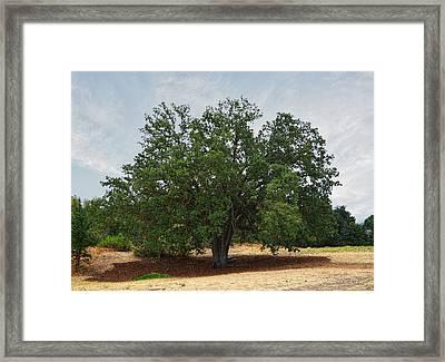 California Oak Tree At Paramount Ranch Framed Print by Glenn McCarthy Art and Photography