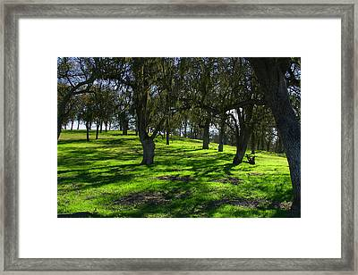 California Oak Woodland With Dappled Sunlight Framed Print