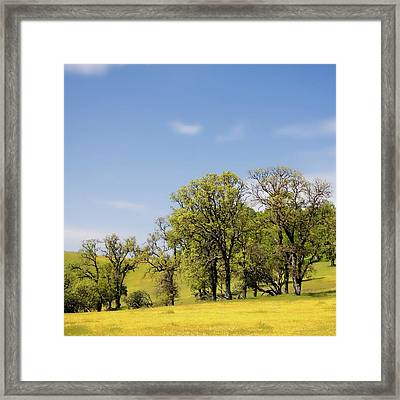 California Oaks And Wildflowers Framed Print