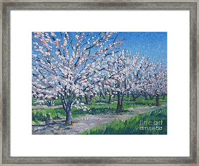 California Orchard Framed Print by Vanessa Hadady BFA MA