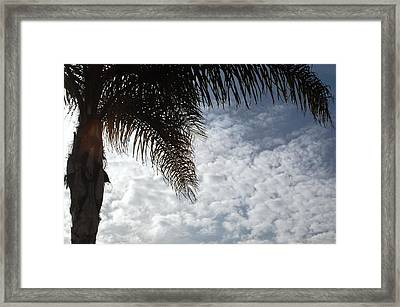 California Palm Tree Half View Framed Print