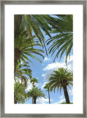 California Palm Trees Framed Print by Art Block Collections