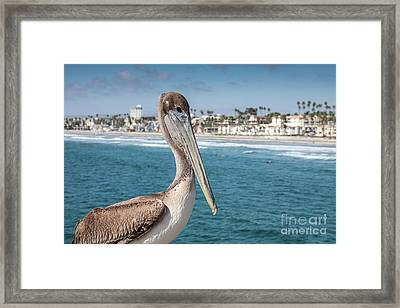 California Pelican Framed Print