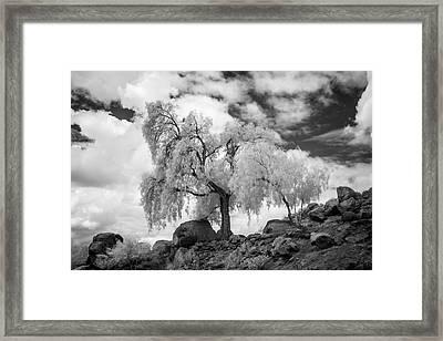 California Pepper Tree Framed Print