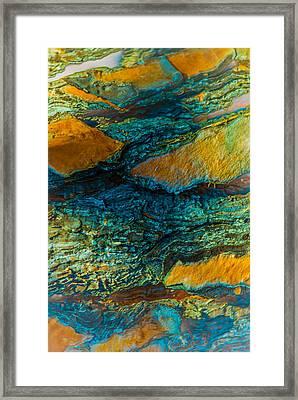 California Pine Bark Abstract Framed Print
