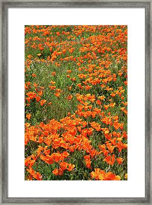 Framed Print featuring the mixed media California Poppies- Art By Linda Woods by Linda Woods