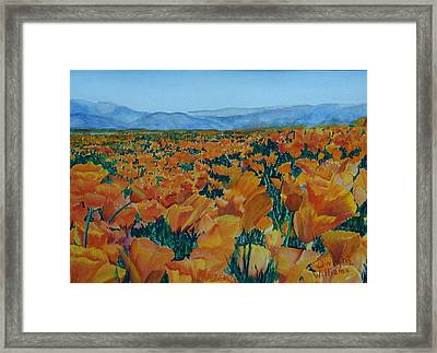 California Poppies Framed Print by Dwight Williams