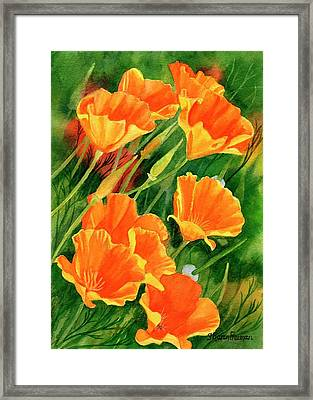 California Poppies Faces Up Framed Print by Sharon Freeman