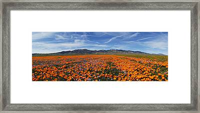 Framed Print featuring the photograph California Poppies by Gary Cloud