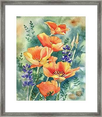California Poppies In Bloom Framed Print