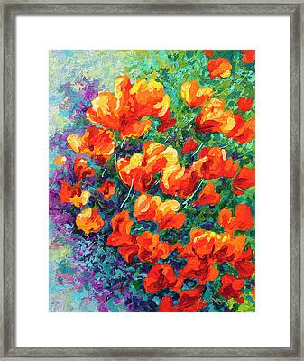 California Poppies Framed Print by Marion Rose