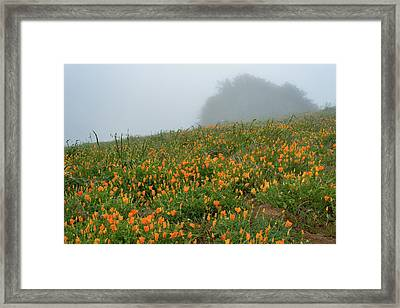 California Poppies On Volcan Mountain Framed Print