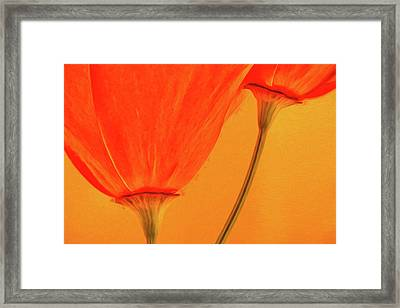 California Poppies Painterly Effect Framed Print by Carol Leigh