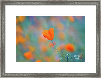 Spring Poppy Framed Print by Anthony Bonafede
