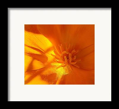 All Poppies Framed Prints