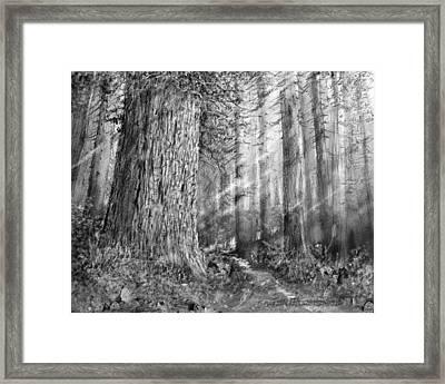 California Redwood Enchanced Framed Print by Jim Hubbard