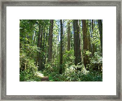 California Redwood Trees Forest Art Prints Framed Print