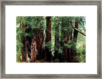 California Redwoods Framed Print by Sonja Anderson
