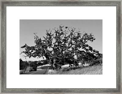 California Roadside Tree - Black And White Framed Print