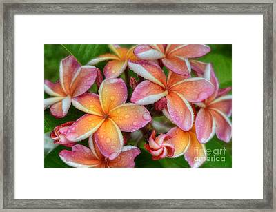 Framed Print featuring the photograph California Sunset by Kelly Wade