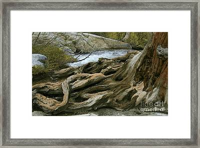 California Framed Print
