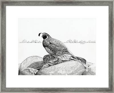 California Valley Quail Framed Print