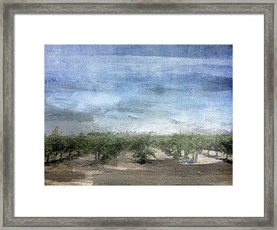 California Vineyard- Art By Linda Woods Framed Print